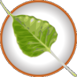 Logo Bodhi Linux 215px
